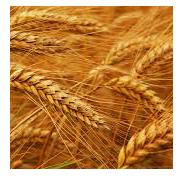 Agriculture & Biodiversity